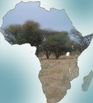 Africa's transformation needs strong leaders