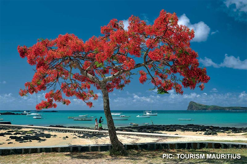 Mauritius evolution: Why many are taking their business to the beach