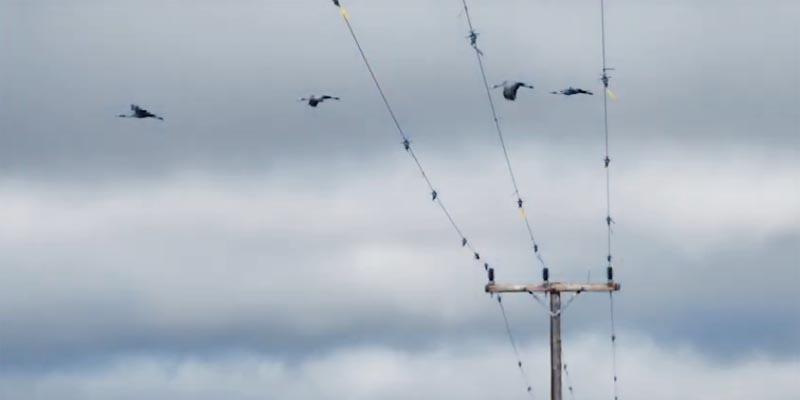 EWT, Eskom drone strategy to mitigate mortality in large bird species